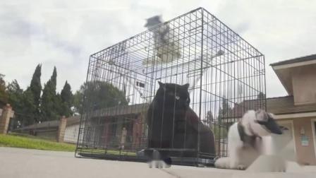四川方言搞笑动物配音:猫咪讲四川话,还要耍