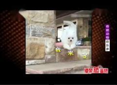 搞笑段子合集:奇葩动物欢乐多