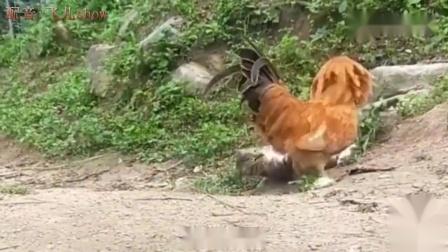 搞笑动物配音:孩子你要忍住,这个人咱们惹不