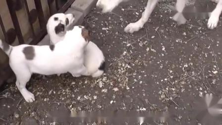 搞笑动物配音要是动物会说四川方言,笑点一下
