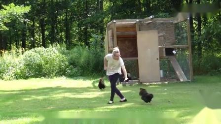搞笑动物配音母鸡在台球上下个蛋,竟把所有球