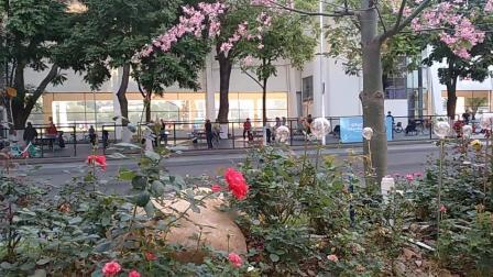 广州市天河区体育中心广场!,二零一九年十一