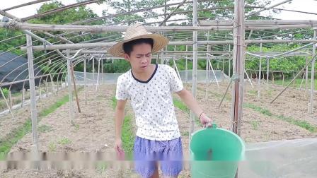 闽南语搞笑视频:如果当初我没有走出稻田,结