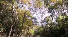 惠州博罗一秋枫寨,乡村探秘带你一起探索山中