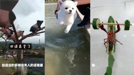 搞笑动物:这才是正宗狗刨式游泳,不会的朋友