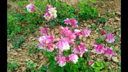 佛歌唱段-佛教音乐《断瘟咒》彩色花