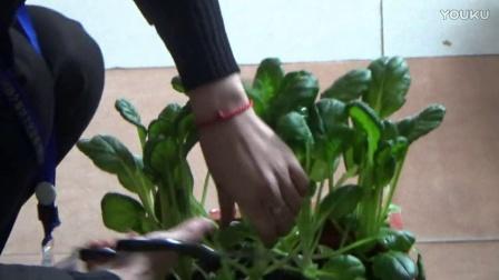 有机盆栽蔬菜-宣传片