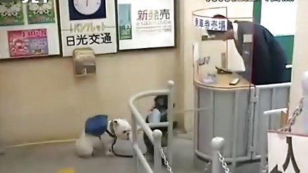 狗狗猩猩大冒险 S1 Ep.07