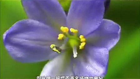 【盟创科技】改变的力量 : 种下一颗绿色的种子「打开植物的潘多拉」植物导览