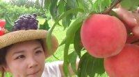 日本水果自助 随便采随便吃 无限制