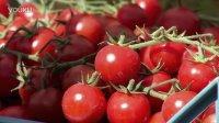 西红柿盛宴 100