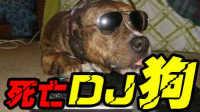 小贱解说:《论英雄玩法系列》  你见过用音箱玩游戏的死亡DJ狗吗?