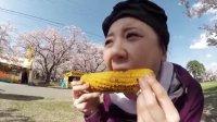 青森赏樱花 参加名古屋NHK节目小报告之一