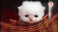 各种奶猫奶狗奶兔来袭,开心的一天从萌宠开始!搞笑视频搞笑短片萌宠视频