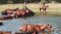 额尔古纳河里的马群