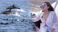 薄荷岛出海追寻野生海豚 近距离欣赏海豚群的绝妙表演 08