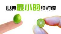 切开世界上最小的迷你柠檬!cutting open world's smallest lime!