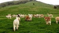 新西兰旅游《绿色之国》--男博万视觉.MP4