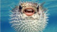 【逍遥小枫】无敌河豚!上万伤害的海底真霸主! | 海底大猎杀(Fish Sim)#36
