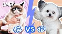 【OMG!问东西】你喜欢狗还是猫?