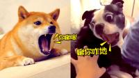 蠢萌动物的表情包大赛 19