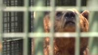 男子在青岛动物园喂熊被咬 手指瞬间被熊吞进肚子里