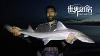 新西兰猎人一拳打晕鲨鱼