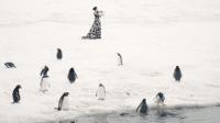 南极冰盖上参加演奏会的企鹅海豹们 36