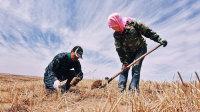 他在沙漠里 15年默默种下了500多万棵树 127