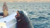 一只大海狮突然蹿上游艇 与小女孩来了个亲密接触