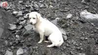 你在找主人吗? 茂县垮塌救援现场一只小狗不肯离去