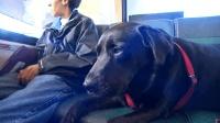 遛狗不用人? 这只狗狗会自己坐公交车去公园!