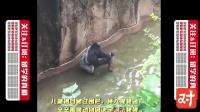 大猩猩挟持儿童 美国人选择立即射杀