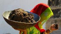印度奇葩节日互砸牛粪祈求健康, 被砸越多越幸运!