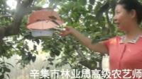 京津冀聚焦村闻【辛集绿色无公害果品种植】