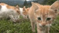 150秒带你认识可爱的猫咪一家子