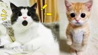 萌宠Show:这猫要上天啊!自带弹射器的喵星人! 04期