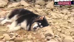 狗子:你是真狗!等你钓鱼还不如睡一觉!