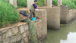 雨后小河闸口边钓鱼有技巧,钓近的处接连上鱼、钓远处遭遇无口