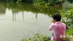 长沙气温升到26度到底好欠好钓鱼?看看小哥唐坡上大鲫鱼接连钓起就知道了