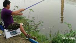 门前家塘上钓友提着桶子钓鱼,接连钓起大鲫鱼留下、小鲫鱼放流很自在
