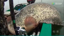 男子野外钓鱼,没想到上来如此大的鲶鱼,赚大了