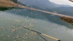 钓鱼还是这样打窝好,刚撒下去河里的鱼沸腾了,太兴奋了!