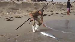 海边钓鱼,这运气也太好了,大鱼频频上