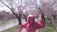 解明 日本第一樱花弘前公园的秘密