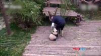 57秒熊猫抱大腿视频发布仅一天 国外网站播放破亿