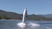 """【触动力】将""""鲨鱼""""变成坐骑的水上飞艇Seabreacher"""