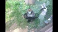 北京动物园2017年6月20日 用视频记录下我们的点点滴滴
