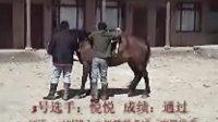 中华回族交友网草原骑师考试训练
