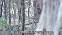 獵奇 第九集 狩猎天堂澳大利亚